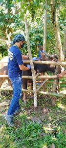 Veterinary Integrated Barangay Extension Services (VIBES)